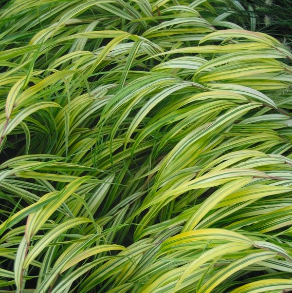 Gräsersorten zillmer stauden gräser jungpflanzen sortiment